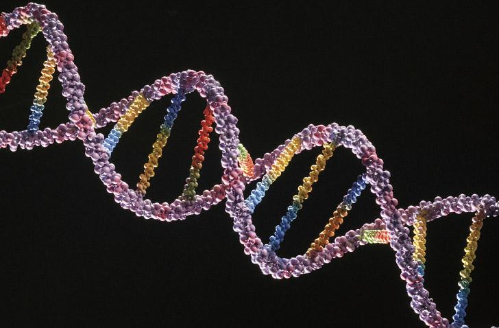 Ученые намерены выявить ген, отвечающий за растяжки.